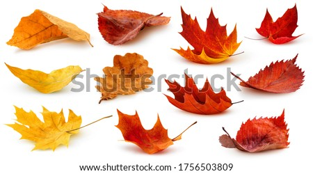 Autumn leaf Stock photo © Anna_Om