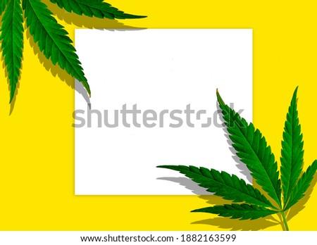 Usine cadre naturelles vert feuille Photo stock © artjazz