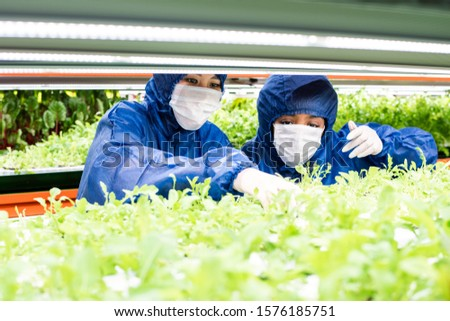 Two greenhouse workers in protective coveralls looking through green seedlings Stock photo © pressmaster