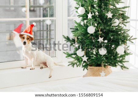 Image of small dog in Santa Claus hat poses on windowsill near decorated tree. Festive event and Chr Stock photo © vkstudio