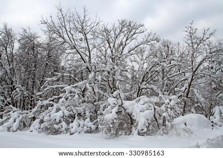 Winter bomen diep sneeuw ijzig Stockfoto © galitskaya