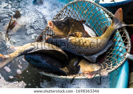 sale of Christmas carps (Czech Christmas tradition), Czech Repub Stock photo © phbcz
