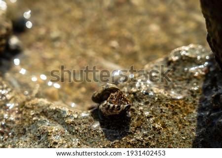 krab · strandzand · gat · strand · zon · natuur - stockfoto © kacpura