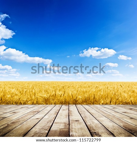 a golden wheat field under an blue sky with the sun in zenith stock photo © kayros