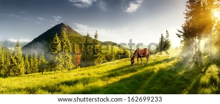 brown horse in a pasture in mountains summer landscape on sunny stock photo © kotenko