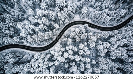winter road with trees covered with frost and snow in the fog stock photo © maxpro