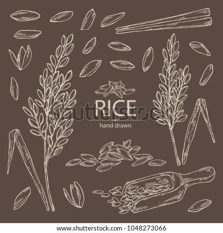 Bruin rijst granen plaat geïsoleerd gezonde voeding Stockfoto © MaryValery