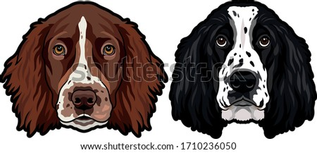 Isolated black outline head of english cocker spaniel on white background. Line cartoon breed dog po stock photo © olkita