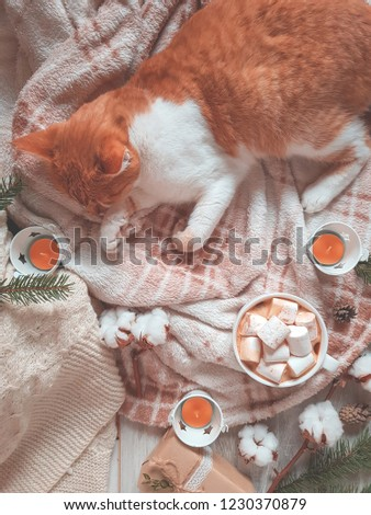 Stock photo: Red white cat on plaid, cup of coffee, cotton plant flower branc