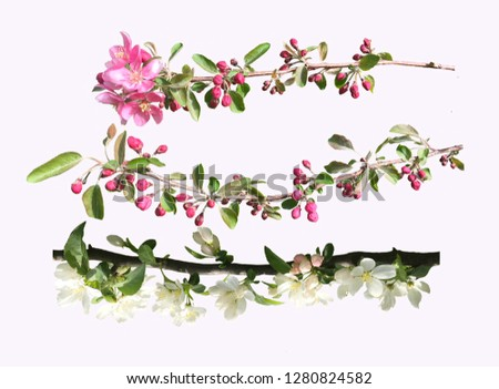 Photo of blossoming tree brunch with white and pink apple tree f Stock photo © Margolana