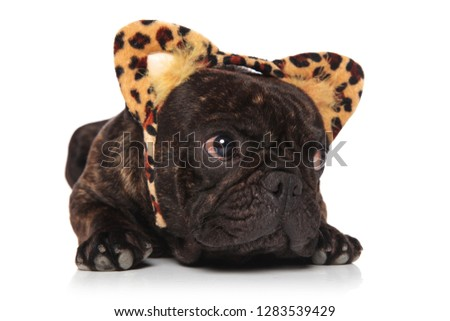 curious french bulldog wearing animal print headband looks to si Stock photo © feedough