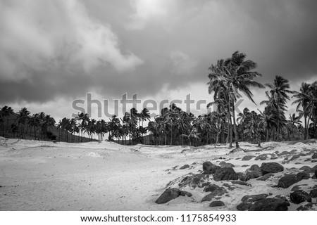 Pálmafák tengerpart Húsvét-szigetek feketefehér Chile kép Stock fotó © daboost