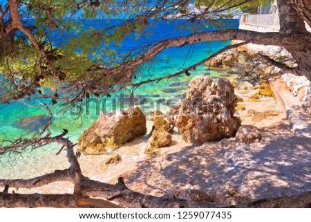 のどかな ターコイズ ビーチ 表示 松 地域 ストックフォト © xbrchx
