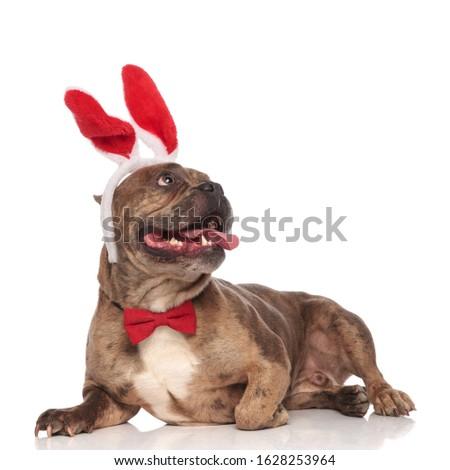 Haletant lapin costume Photo stock © feedough