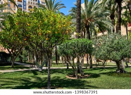 Exuberante palmeras dentro cerrado urbanización verde Foto stock © amok