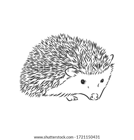 Hedgehog. Icon on black and white background. Animal vector illustration Stock photo © Imaagio