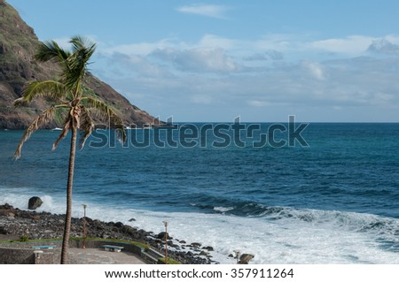 Palm tree in front of black rock stone beach coast on cape verde island Stock photo © attiarndt