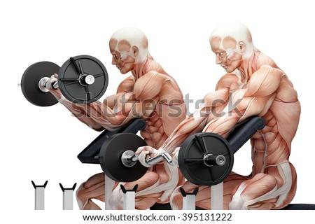 Biceps exercise with EZ curl bar. Anatomical illustration. Isola Stock photo © Kirill_M
