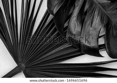 Tropikal dizayn beyaz palmiye yaprağı bitkiler karanlık Stok fotoğraf © BlueLela