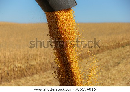 Combine harvester auger unloading harvested corn into tractor tr Stock photo © stevanovicigor