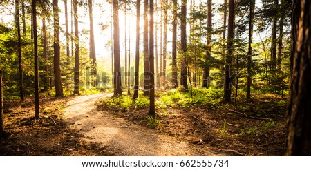 Mountain bike sunset silhouette on forest trail, inspiring lands Stock photo © blasbike
