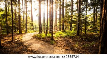 Mountain bike sunset silhouette on forest trail, inspiring lands stock photo © blasbike