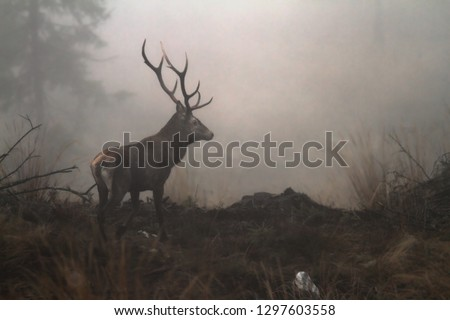beautiful red deer buck in the wilderness of Carpathian mountains Stock photo © taviphoto