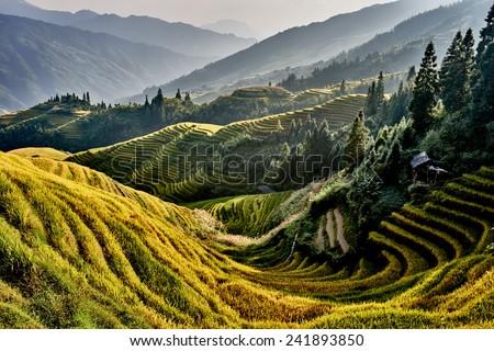 コメ 風景 中国 自然 山 夏 ストックフォト © Juhku