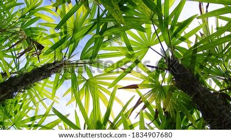 пальмами пышный свежие ярко зеленая трава Сток-фото © amok