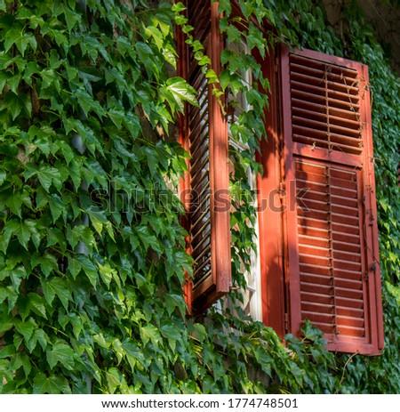 Antiguos fachada cubierto hiedra ventana abierto Foto stock © boggy