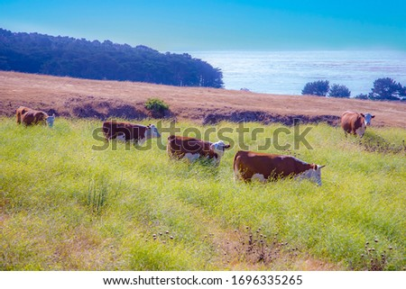 cows graze fresh grass on a meadow in Andrew Molina State park a Stock photo © meinzahn