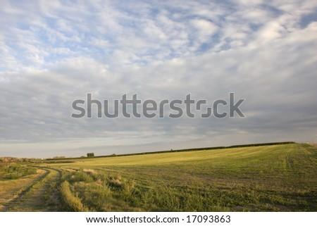 Fazenda estrada alfafa campo Colorado alto Foto stock © PixelsAway