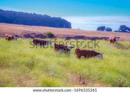 vaca · campo · oceano · natureza · paisagem · montanha - foto stock © meinzahn