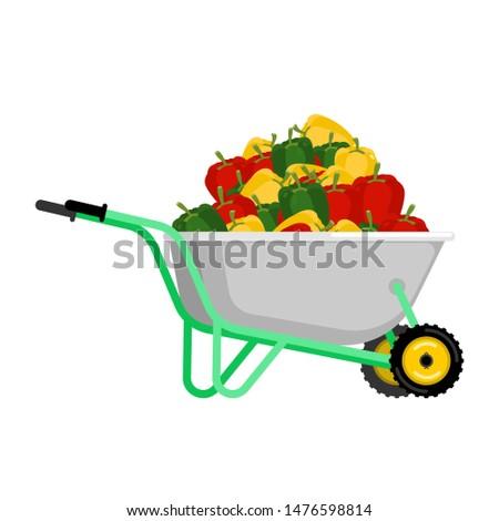 手押し車 唐辛子 野菜 庭園 ビッグ 収穫 ストックフォト © popaukropa