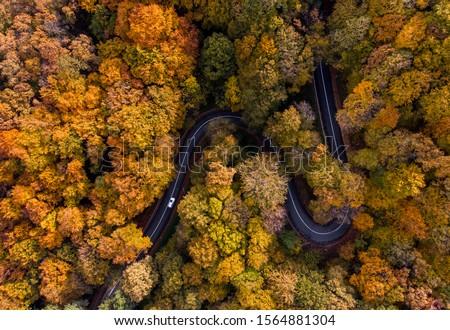 verde · campi · strada · panorama · alberi - foto d'archivio © artjazz