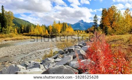 yellow autumn leaves with blue sky stock photo © vapi
