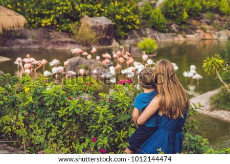 Mom and son are looking at the flock of birds of pink flamingos on a pond Stock photo © galitskaya