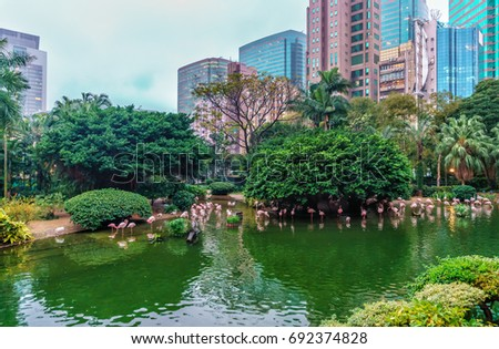 A flock of birds of pink flamingos on a pond in Hong Kong Park Stock photo © galitskaya