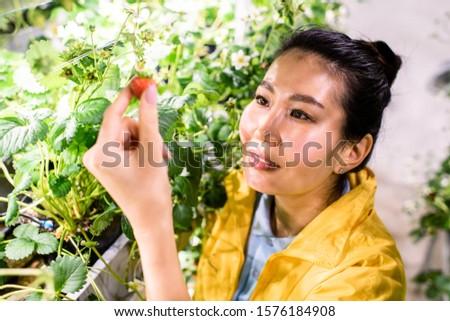 Effet de serre travailleur fraise soins Photo stock © pressmaster