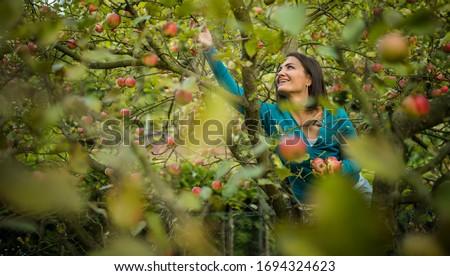 Cute jonge vrouw appels boomgaard Stockfoto © lightpoet