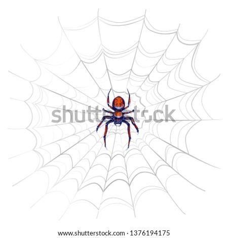 Egzotyczny niebezpieczeństwo pająk czerwony skomplikowany Zdjęcia stock © evgeny89