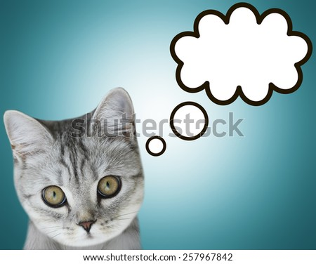 Cute tabby cat at home - laying on sofa and thinking, blank ball stock photo © HASLOO