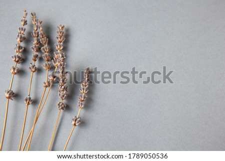 Lavender herb flower leaf sprigs with an aromatherapy essential  Stock photo © tetkoren