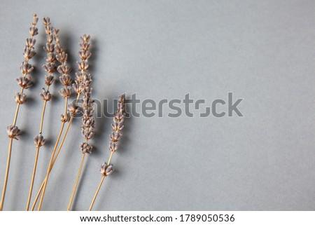 Lavender herb flower leaf sprigs with an aromatherapy essential  stock photo © tetkoren