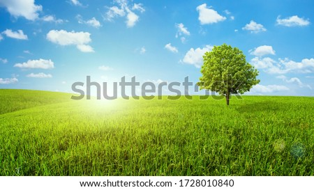 Beautiful, solitary tree on an agricultural plantation in Southe Stock photo © pzaxe