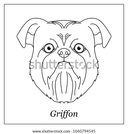 Isolated black outline head of brussels, belgian griffon on white background. Line cartoon breed dog stock photo © olkita