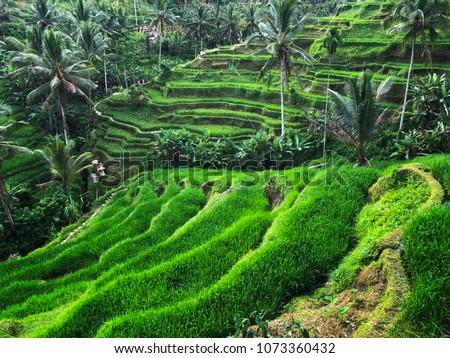 Green cascade rice field plantation at Tegalalang terrace. Bali, Indonesia BANNER, long format Stock photo © galitskaya
