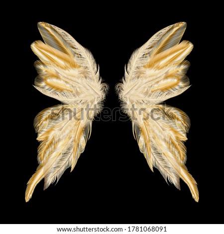 Borboleta dourado asas isolado branco vetor Foto stock © Lady-Luck