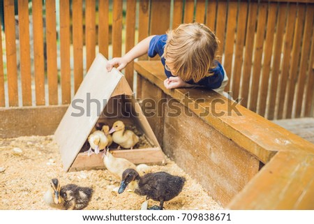 toddler boy caresses and playing with Ducklings in the petting zoo. concept of sustainability, love  Stock photo © galitskaya