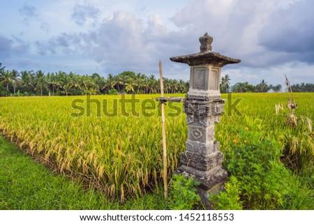Hagyományos ház szeszesitalok rizsföld Bali Indonézia Stock fotó © galitskaya